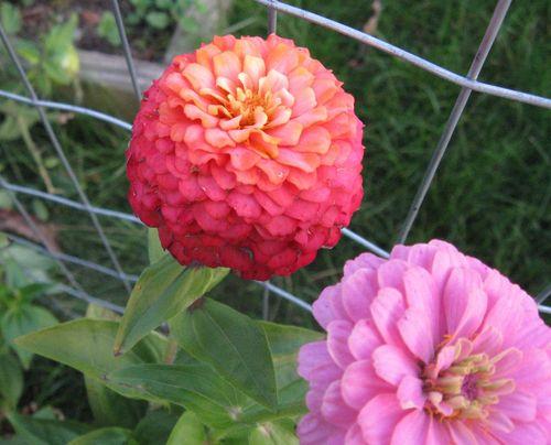 Bloom 003