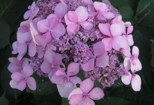 Bloom 012