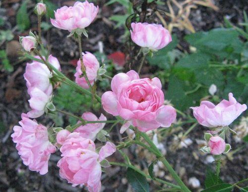 Bloom 014